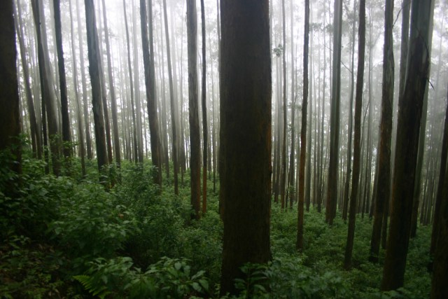 ooty dense trees and hill station  Images