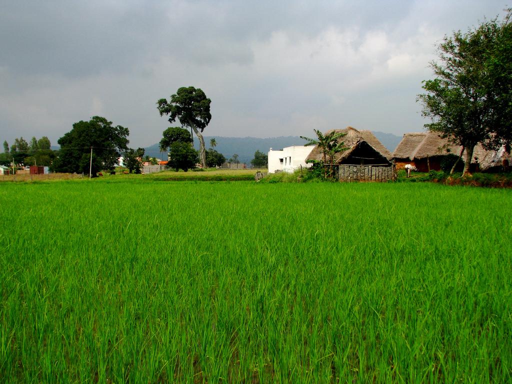 yelagiri tribal villages Image