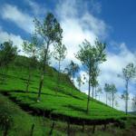 Kerala, the Perfect Monsoon Getaway