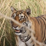 A visit to the Ranthambore National Park