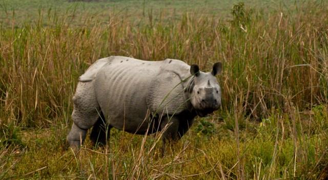 Kaziranga National Park Assam rhinoceros images