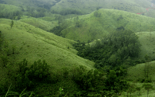 Woodlands of Wayanad: Bid adieu to the concrete jungle