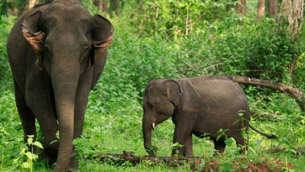 Wayanad Wildlife Sanctuary