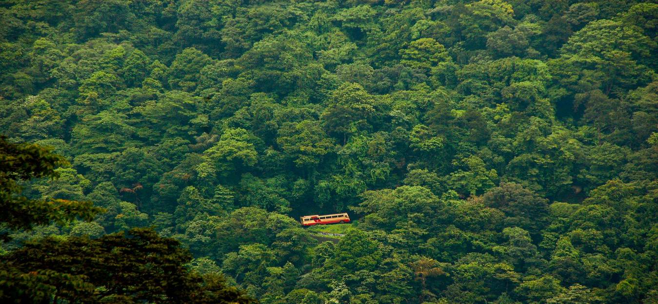 Let's Take a Moment to Appreciate the Beauty of Wayanad