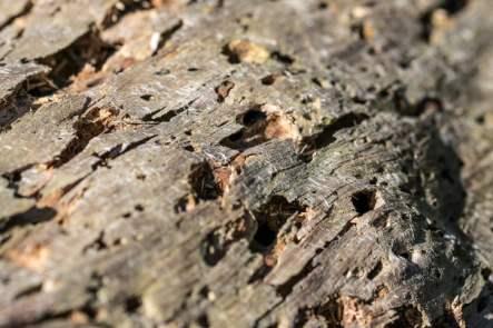kártevő a fában