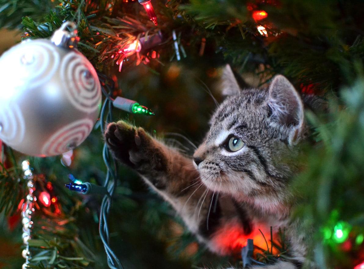 Ők még nálad is jobban rajongnak a karácsonyfáért: de ki kerül ki győztesen ebből a találkozásból? Mókás videónkból kiderül!