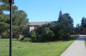 Trees around St. Joseph's campus were damaged in severe thunderstorms over the weekend.