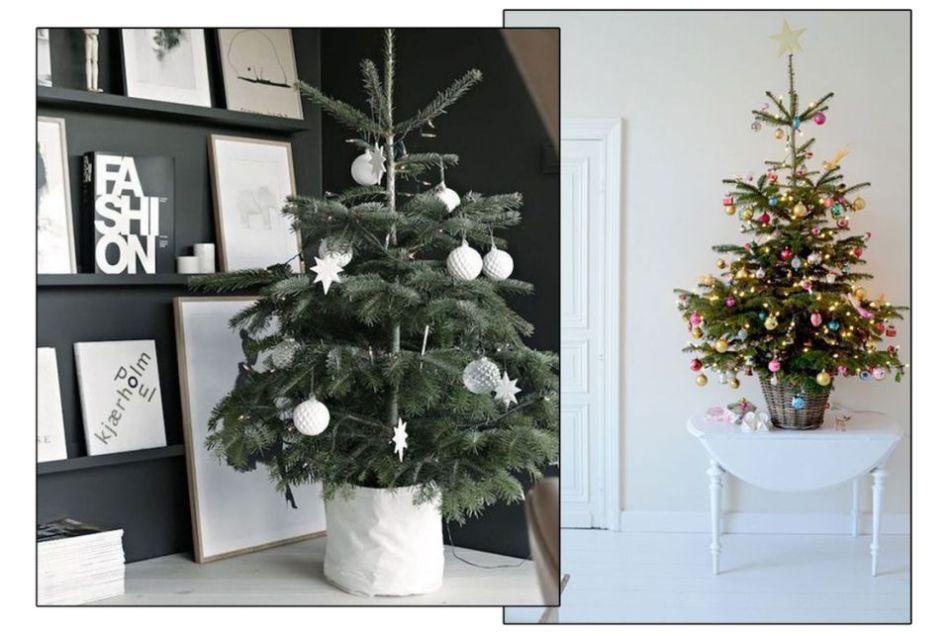 真的聖誕樹能令家居帶出陣陣松樹香氣,令家如置身外國聖誕節一樣,滿滿 聖誕氣氛
