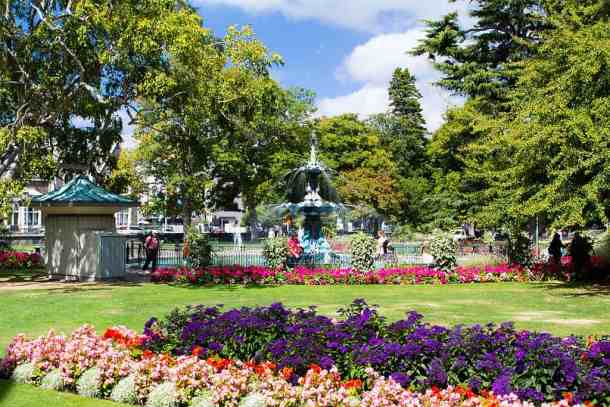 Flowers on a sunny days in Christchurch Botanic Gardens