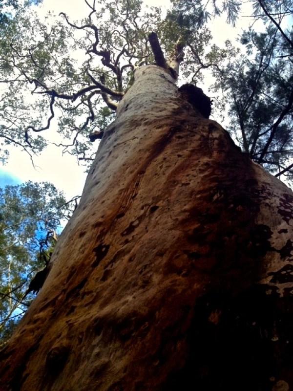 Blue Gum Walk, Hornsby, Australia, Ehmke - Photo4