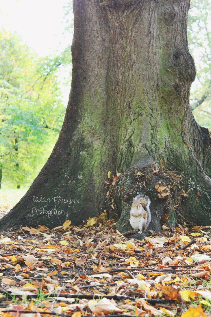 Squirrel-HydePark-London-Johnson-Photo4