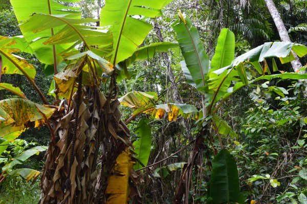 RainForeStation, Cairns, Australia-Ellanna-Photo 3, 2