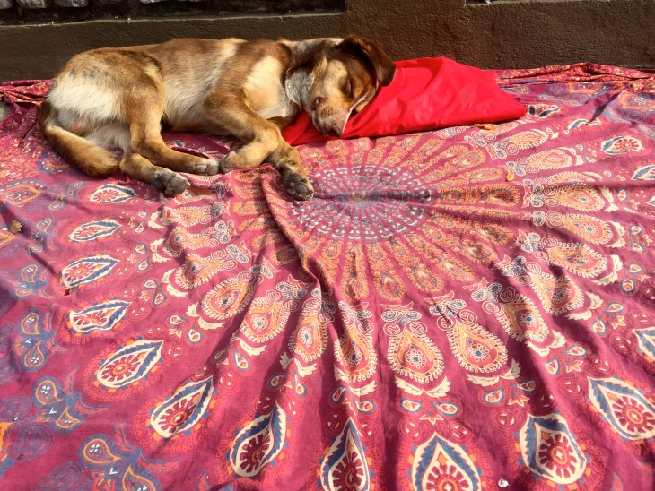 The stray dogs of Chile   ISA Student Blog