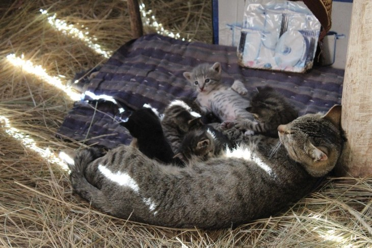 Kittens on Paramis Island