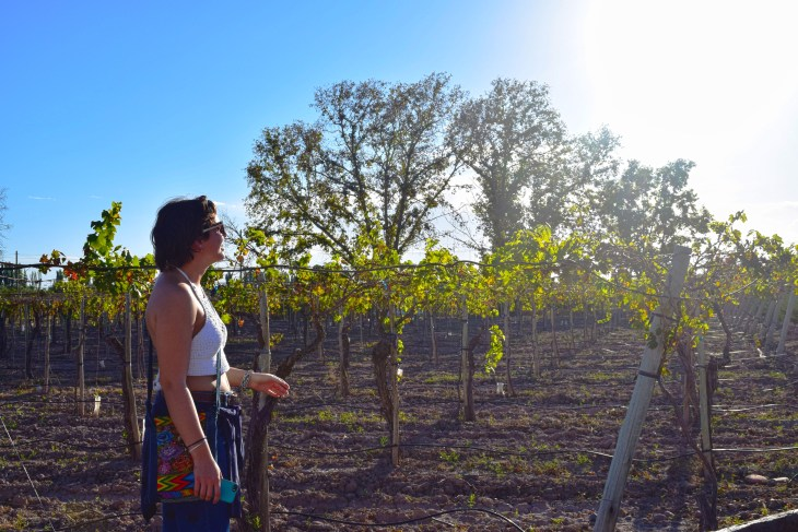 Vineyard, Mendoza, Argentina- Pakalniskis- Photo 2