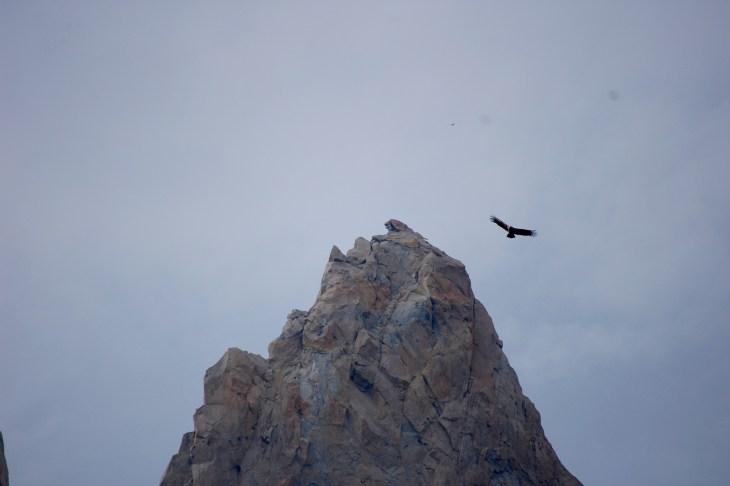 A condor soaring above the valley of Francés