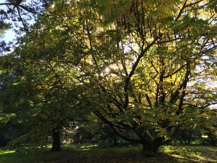tree_blarney_ireland_carlyball_photo3