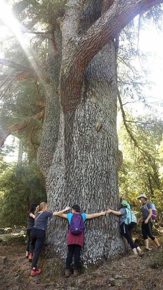 treehuggers_ifrane_morocco_michaellapatterson_photoi