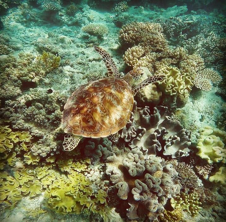 turtle-cairns-australia-cirelli-photo-8