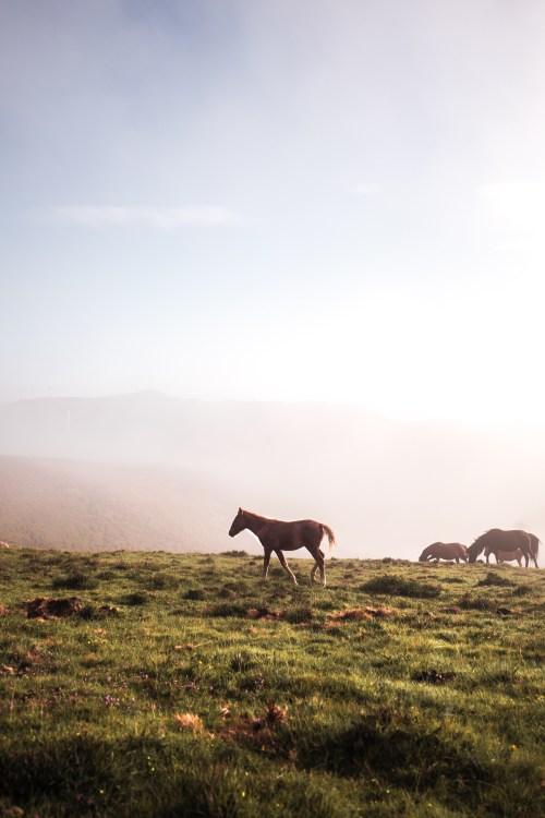 Horses on El Camino, Spain