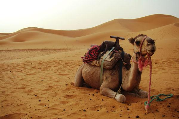 SaharaDesert.Morocco.2011.Unleashing_the_Wild