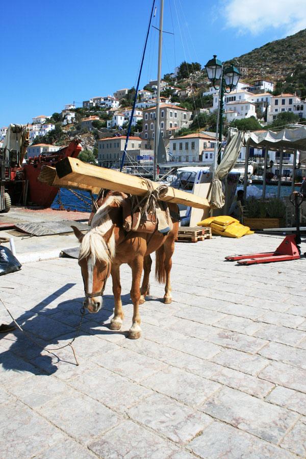 A pack horse in Hydra, Greece