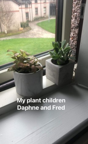 "Two succulents on windowsill. Text: ""My plan children Daphne and Fred"""