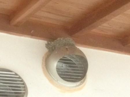 空っぽのツバメの巣