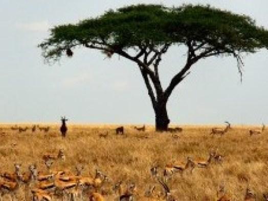 zuid-afrika-natuurpark