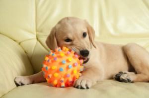 juguetes perro