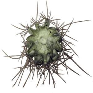 Close up picture of cactus