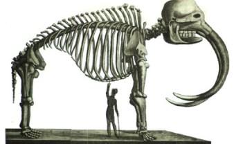 Peale's Mastodon