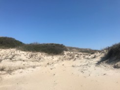 Sights from the hiking trial that parallels the beach access trail at False Cape Landing. It's not uncommon to see coyote tracks.