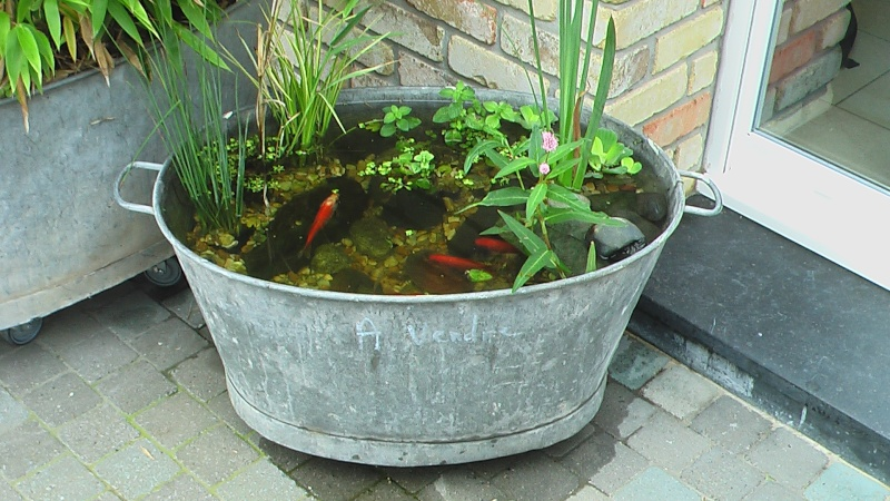 Deco jardin exterieur petit bassin aquatique designmore for Deco petit jardin exterieur