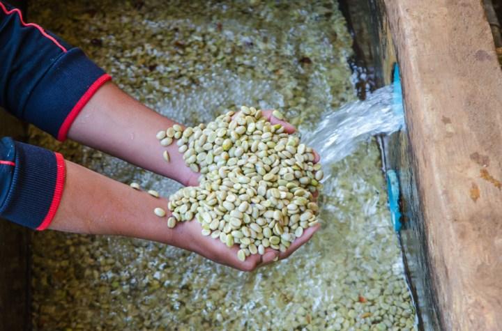 Coffee-processing-ferment