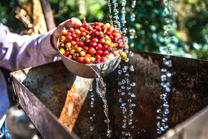 Coffee-processing-washing