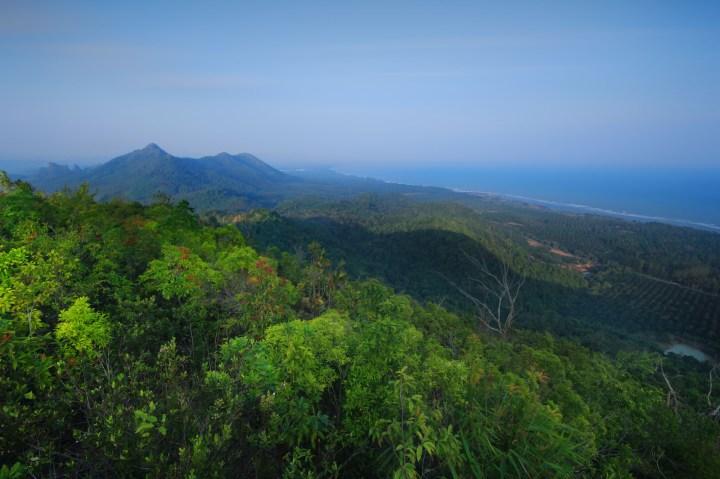 Jamaican-Blue-Mountain-mountain