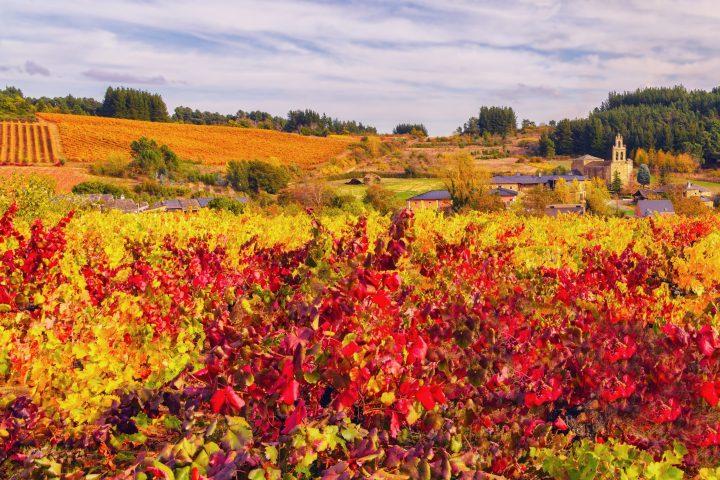 Mencia-vineyard