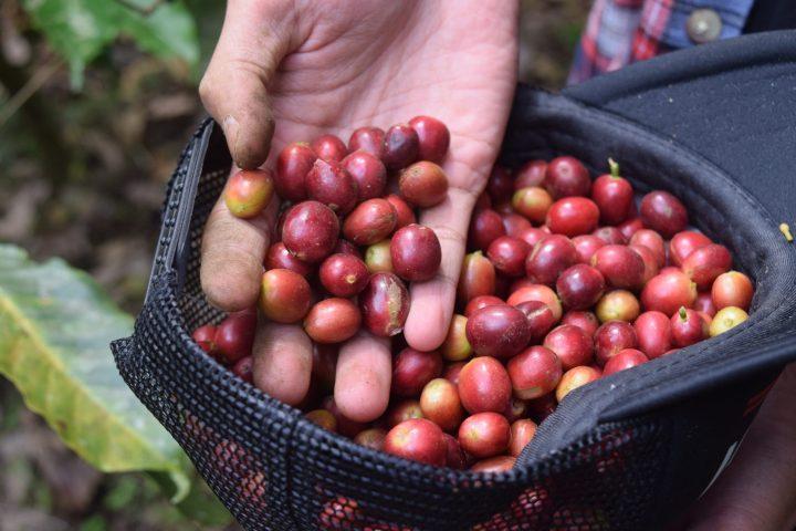 coffee-3408135