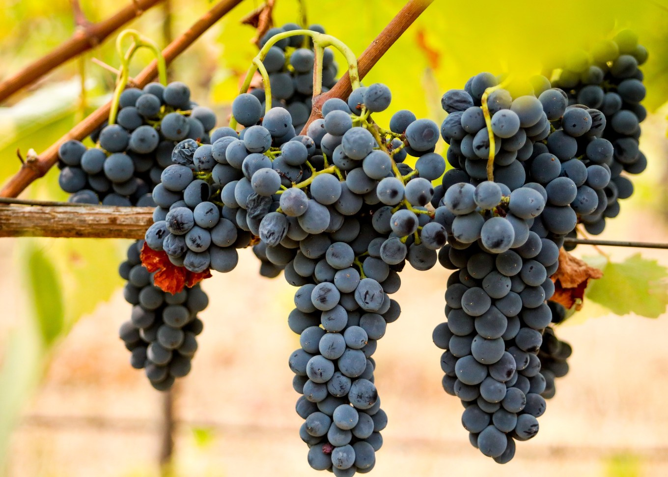 A Beginner's Guide to Louisiana Wine