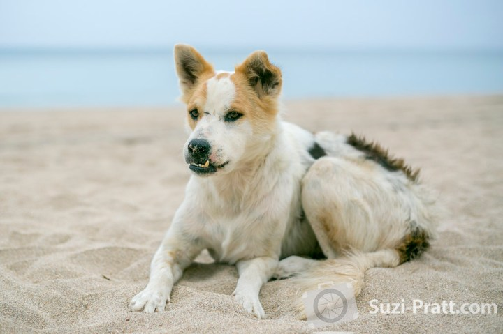 Ko Lanta Thailand Photography dog