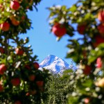 Kiyokawa Family Orchards Hood River Oregon