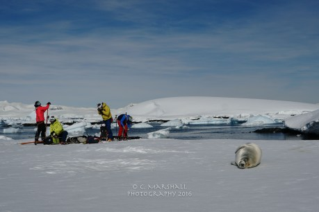 Transitioning from the boat to the ice with the locals undisturbed