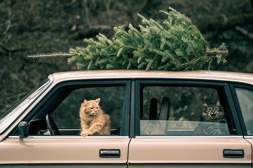 12 Weihnachtsgeschichten | Sweet Home