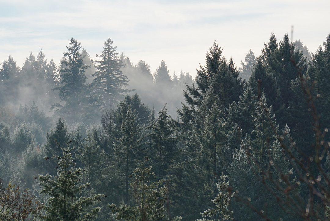 bosque con humo