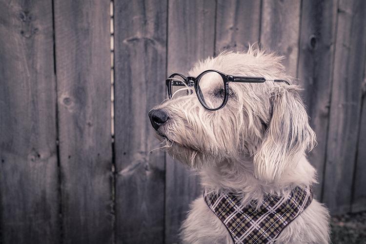 perro estudiante exitoso