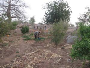 Visite au jardin arbres fruitiers de kansongo fÇvrier 2014. 3