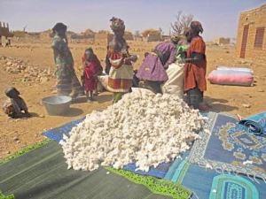 Partage de coton par les femmes de Sal-Dimi