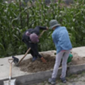 planting trees in Pastavi