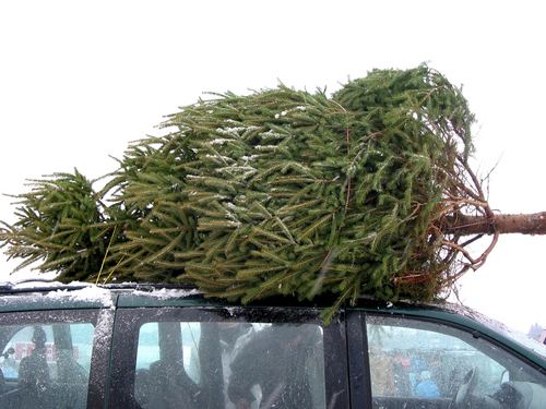 Christmas Tree Hauling Help